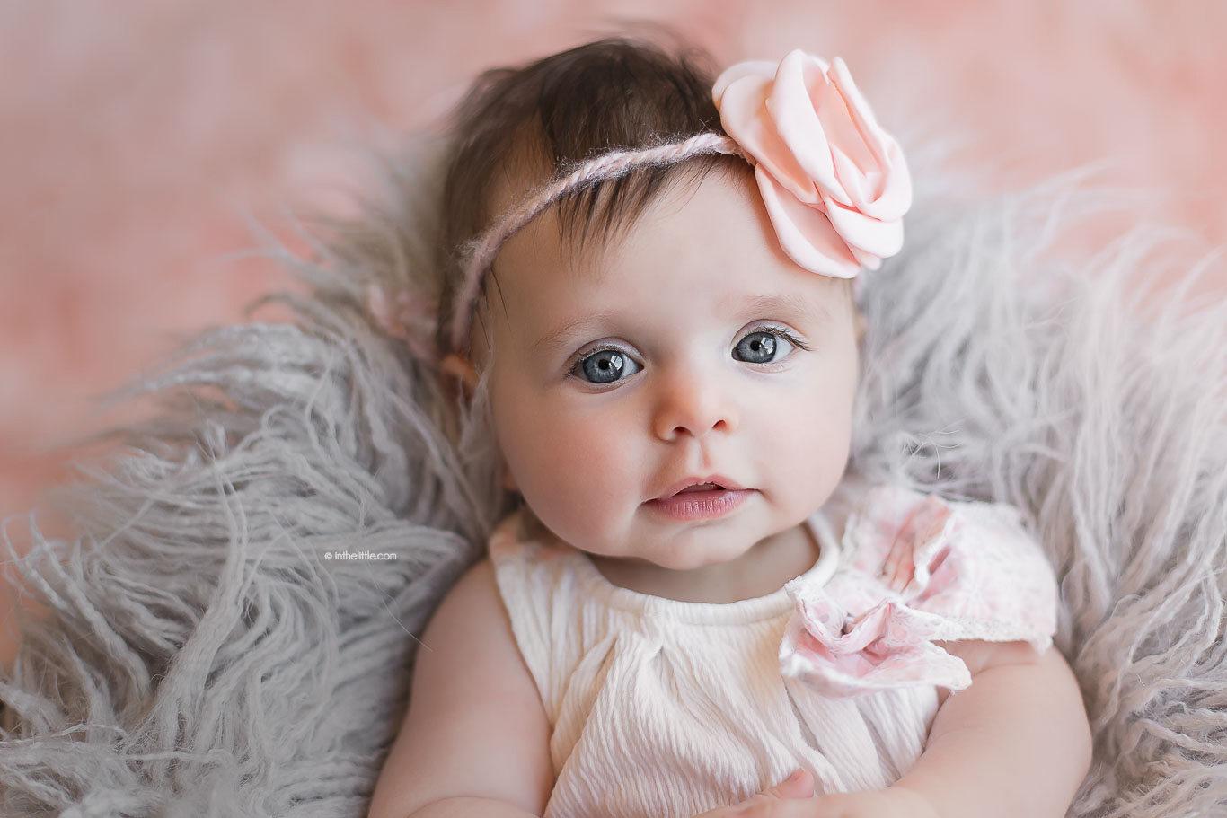 Best Baby Photographers Saint Louis Missouri